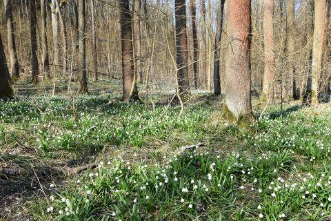 21. březen - Mezinárodní den lesů